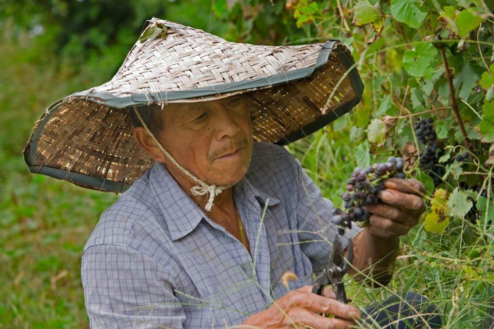 Vinhos da China