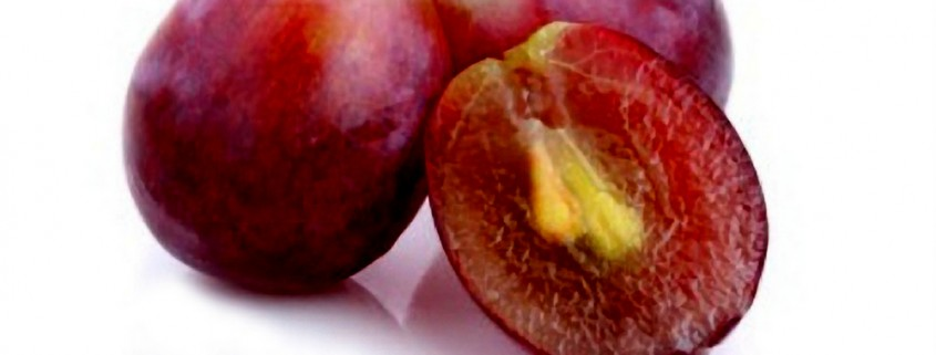 Os taninos da uva