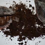 O Almizcle nos vinhos: o aroma da secreção de uma glândula do ânus do cervo almizclero