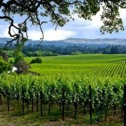 Um em cada 10 vitivinicultores dos Estados Unidos cogita vender suas terras