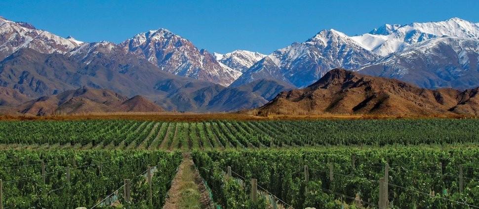 Argentina e Chile promocionam juntos o vinho na Inglaterra