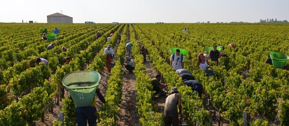 Vinhedos de Bordeaux