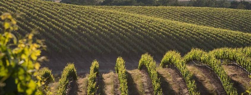 Vinhos do Novo Mundo e Velho Mundo. Como diferenciar