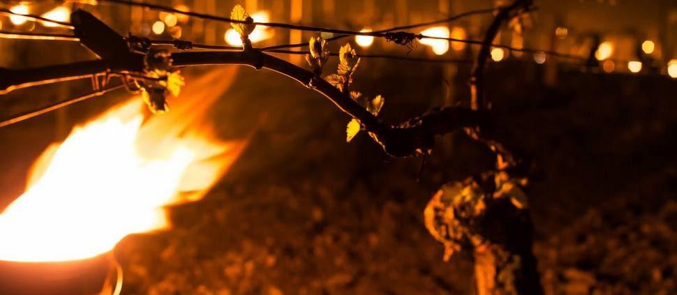 Viticultores de Chablis lutam para proteger as vinhas do gelo