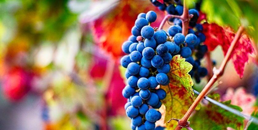 A Pinot Noir fora da Bourgogne