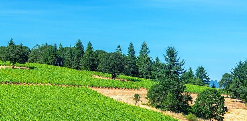 A nova geografia do vinho