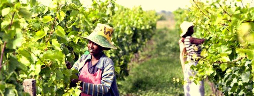 Rift Valley Wines